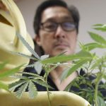 California's Long Journey to Legalizing Pot the Right Way